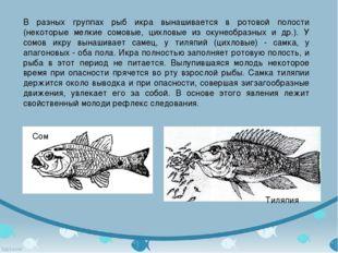 В разных группах рыб икра вынашивается в ротовой полости (некоторые мелкие со