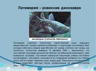 Латимерия - ровесник динозавра Латимерия (Latimeria chalumnae), единственный