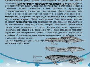 Двоякодышащие рыбы дышат атмосферным воздухом. Их ноздри пропускают поток воз