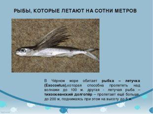 РЫБЫ, КОТОРЫЕ ЛЕТАЮТ НА СОТНИ МЕТРОВ В Чёрном море обитает рыбка – летучка (E
