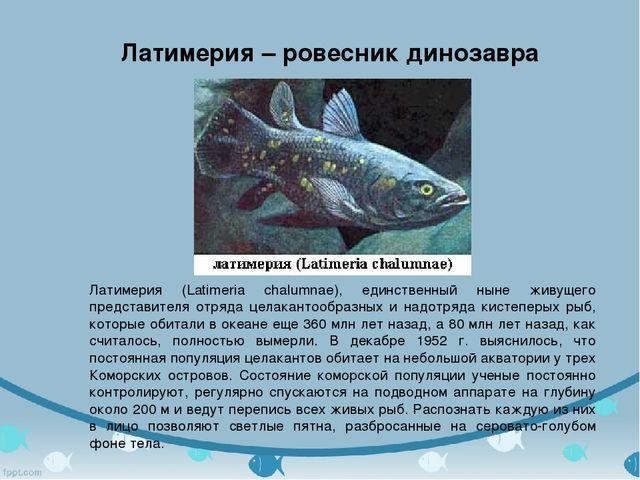 Латимерия - ровесник динозавра Латимерия (Latimeria chalumnae), единственный...