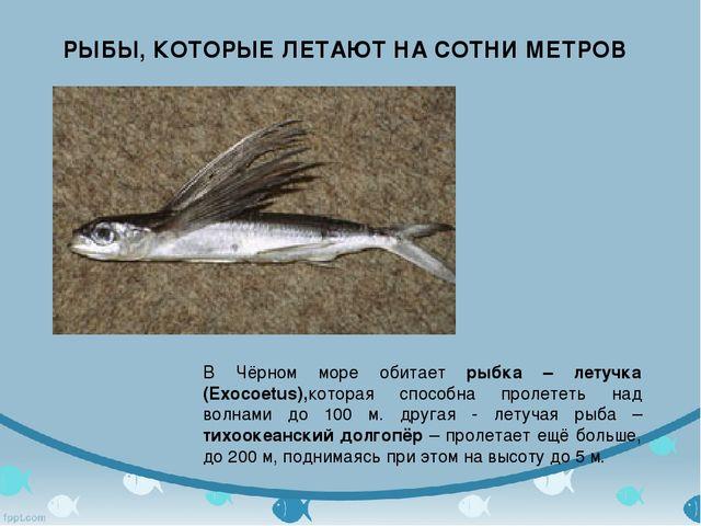 РЫБЫ, КОТОРЫЕ ЛЕТАЮТ НА СОТНИ МЕТРОВ В Чёрном море обитает рыбка – летучка (E...