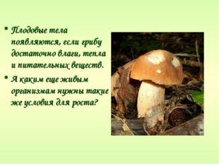 Плодовые тела появляются, если грибу достаточно влаги, тепла и питательных ве