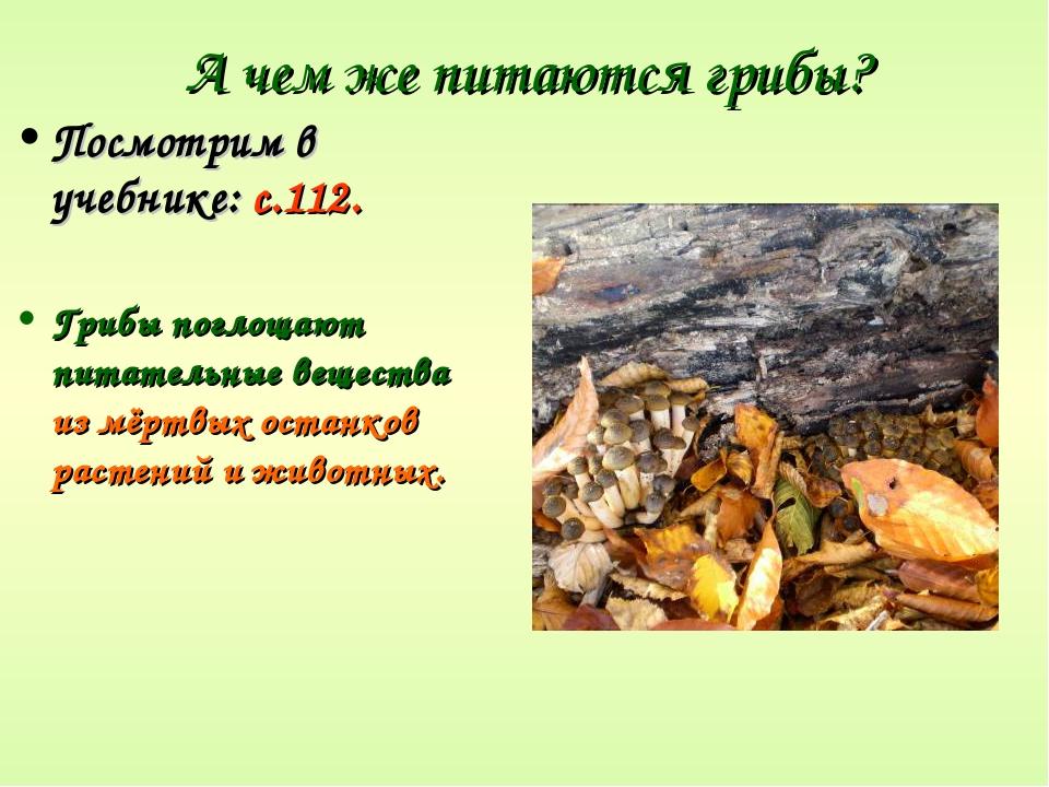 А чем же питаются грибы? Посмотрим в учебнике: с.112. Грибы поглощают питател...