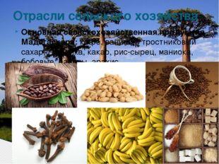 Основная сельскохозяйственная продукция Мадагаскара:кофе, ванилин, тростнико