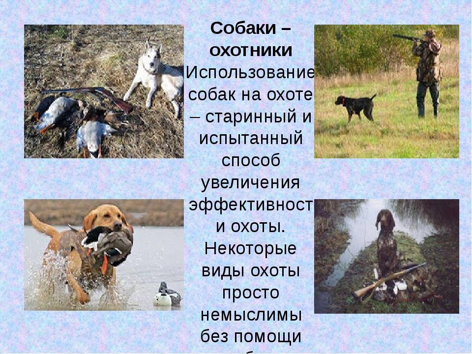 Собаки – охотники Использование собак на охоте – старинный и испытанный спосо...