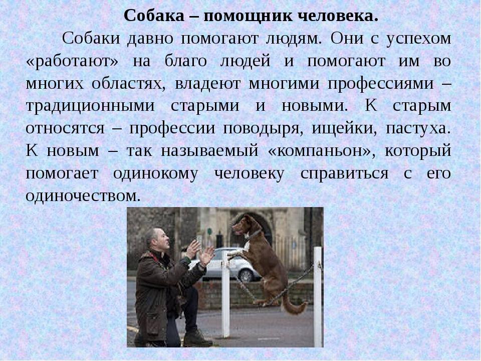 Собака – помощник человека. Собаки давно помогают людям. Они с успехом «работ...