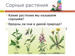 Сорные растения Какие растения мы называем сорными? Вредны ли они в дикой при