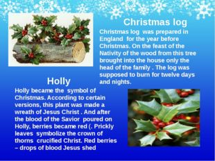 Holly became the symbol of Christmas. According to certain versions, this pla