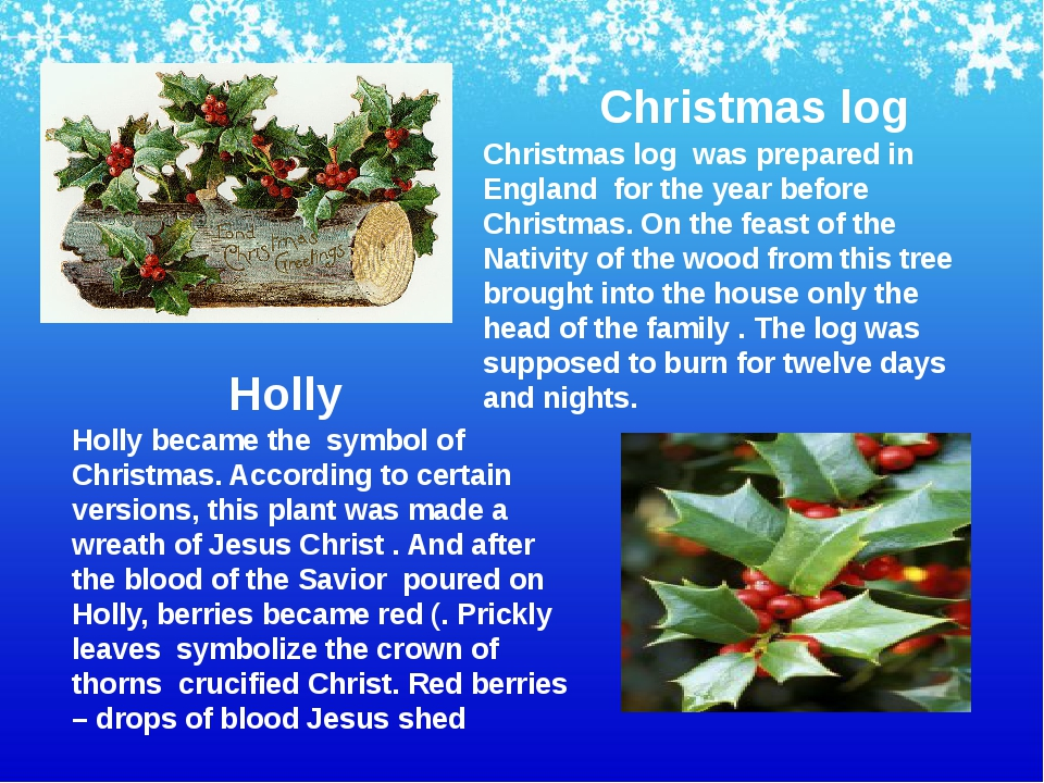 Holly became the symbol of Christmas. According to certain versions, this pla...