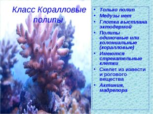 Класс Коралловые полипы Только полип Медузы нет Глотка выстлана эктодермой По