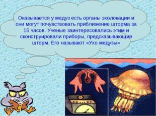 Оказывается у медуз есть органы эхолокации и они могут почувствовать приближе