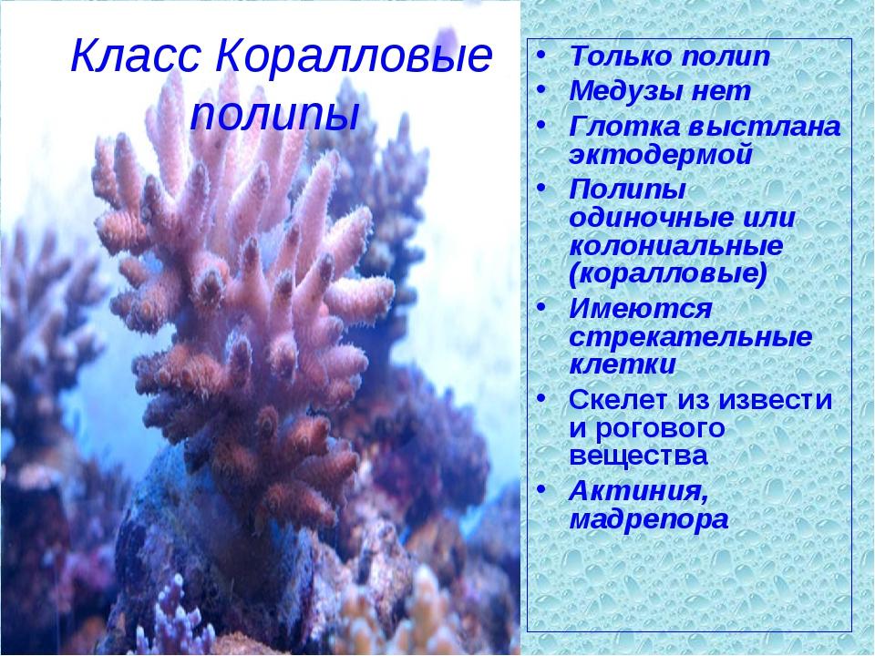 Класс Коралловые полипы Только полип Медузы нет Глотка выстлана эктодермой По...