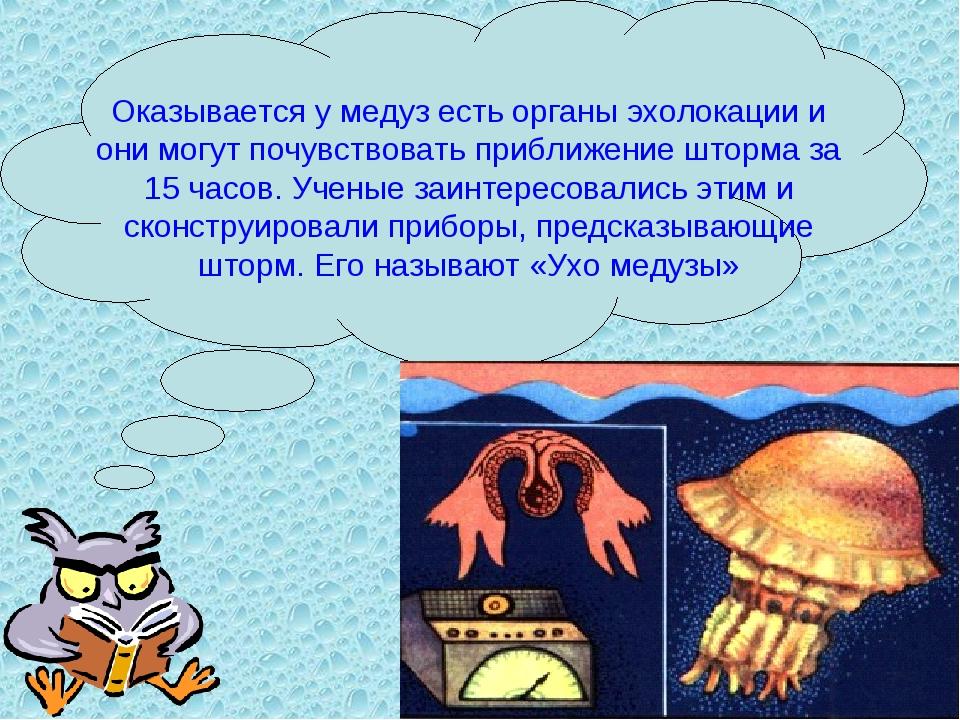 Оказывается у медуз есть органы эхолокации и они могут почувствовать приближе...