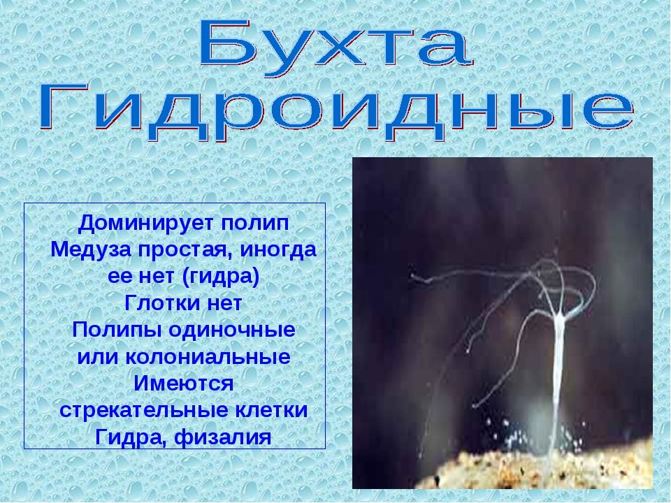 Доминирует полип Медуза простая, иногда ее нет (гидра) Глотки нет Полипы один...