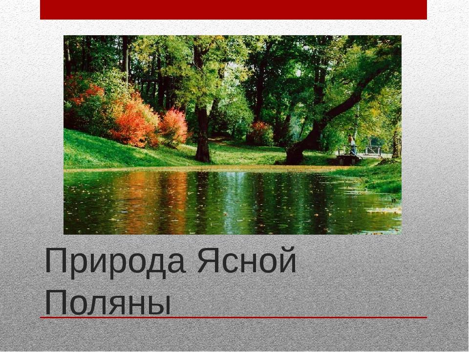 Природа Ясной Поляны