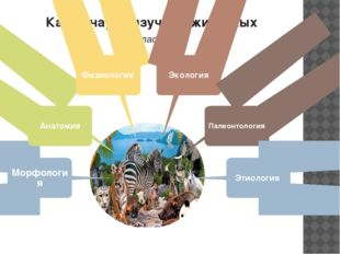 Какие науки изучают животных (кластер) Морфология Анатомия Физиология Экологи