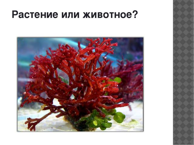 Растение или животное?