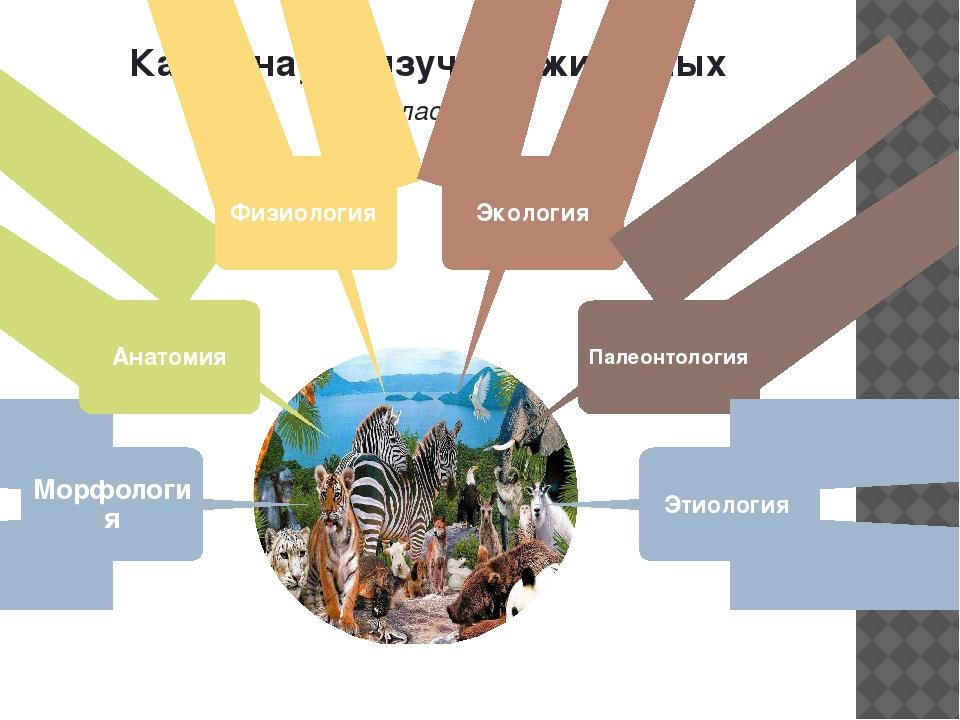 Какие науки изучают животных (кластер) Морфология Анатомия Физиология Экологи...