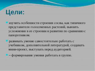 Цели: изучить особенности строения сосны, как типичного представителя голосем