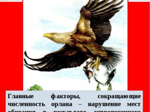 Орлан - белохвост Главные факторы, сокращающие численность орлана – нарушение