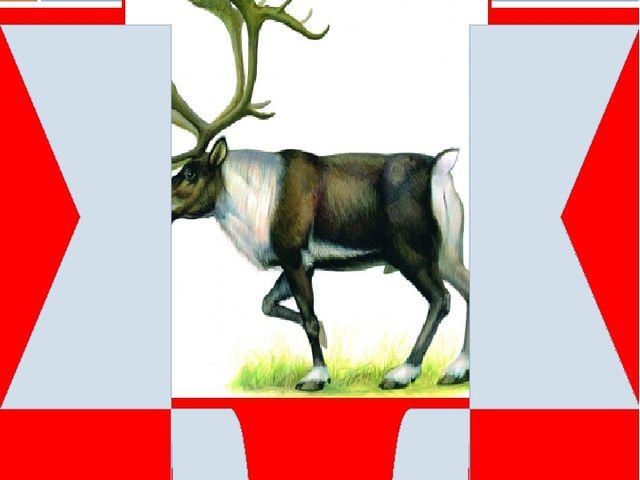 Северный олень (дикий) Снижение численности – браконьерство. Другие факторы:...