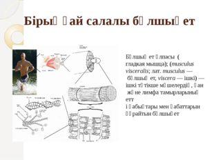 Бұлшық ет ұлпасы (гладкая мышца); (musculus visceralis;лат.musculus— бұлш