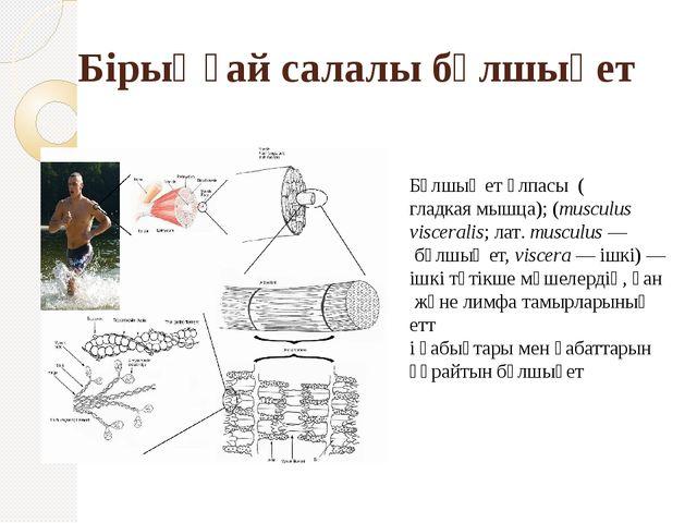 Бұлшық ет ұлпасы (гладкая мышца); (musculus visceralis;лат.musculus— бұлш...