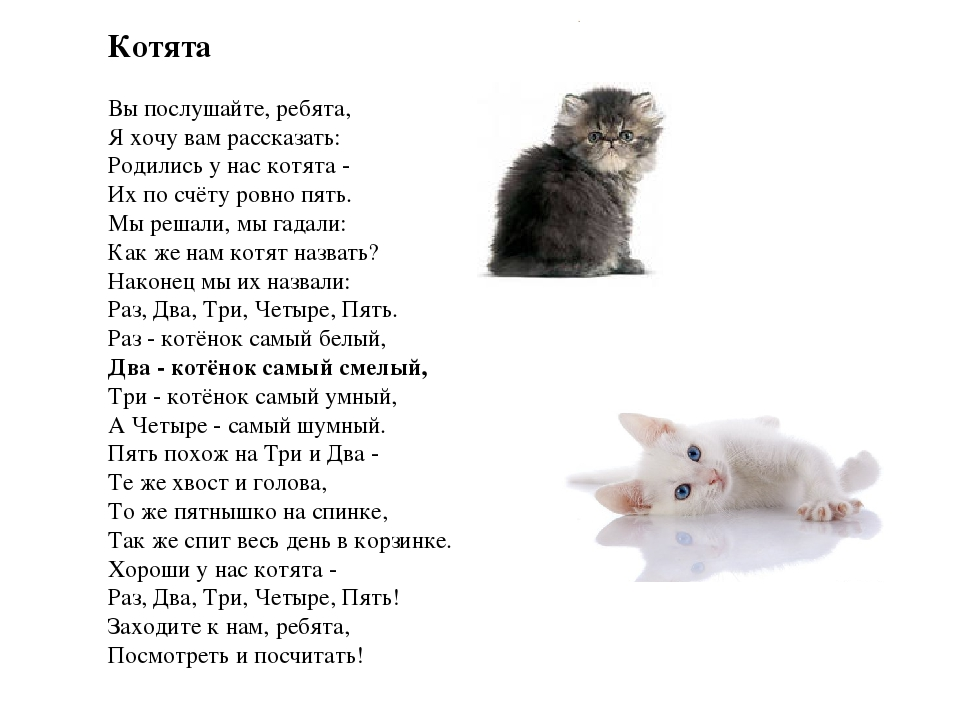 Иллюстрация к котята 1