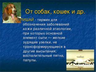 От собак, кошек и др. ЛИШАЙ - термин для обозначения заболеваний кожи различ