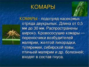 КОМАРЫ КОМАРЫ - подотряд насекомых отряда двукрылых. Длина от 0,5 мм до 30 мм