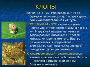 КЛОПЫ Длина 1,6-41 мм. Ряд видов щитников (вредная черепашка и др.) повреждаю