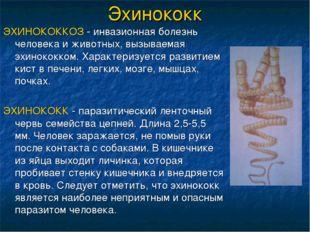Эхинококк ЭХИНОКОККОЗ - инвазионная болезнь человека и животных, вызываемая э