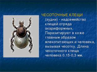 ЧЕСОТОЧНЫЕ КЛЕЩИ (зудни) - надсемейство клещей отряда акариформных. Паразитир