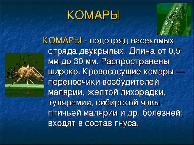 КОМАРЫ КОМАРЫ - подотряд насекомых отряда двукрылых. Длина от 0,5 мм до 30 мм...