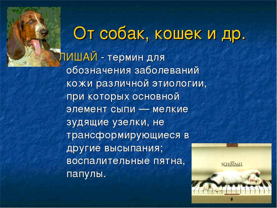 От собак, кошек и др. ЛИШАЙ - термин для обозначения заболеваний кожи различ...