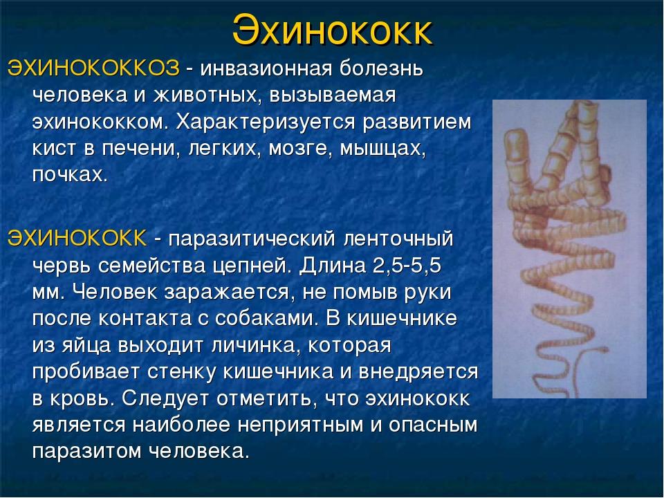 Эхинококк ЭХИНОКОККОЗ - инвазионная болезнь человека и животных, вызываемая э...