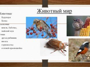 Животный мир Животные Бурундук Белка Насекомые шмель, бабочка, майский жук Пт