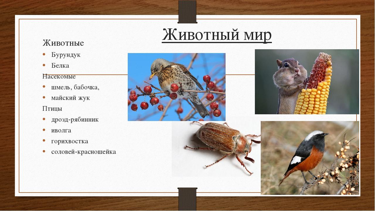 Животный мир Животные Бурундук Белка Насекомые шмель, бабочка, майский жук Пт...