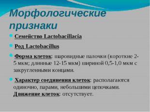 Морфологические признаки Семейство Lactobacillacia Род Lactobacillus Форма кл