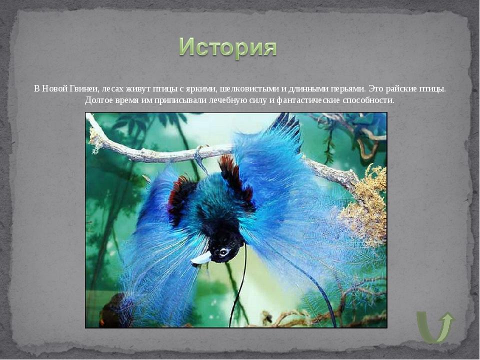 В Новой Гвинеи, лесах живут птицы с яркими, шелковистыми и длинными перьями....