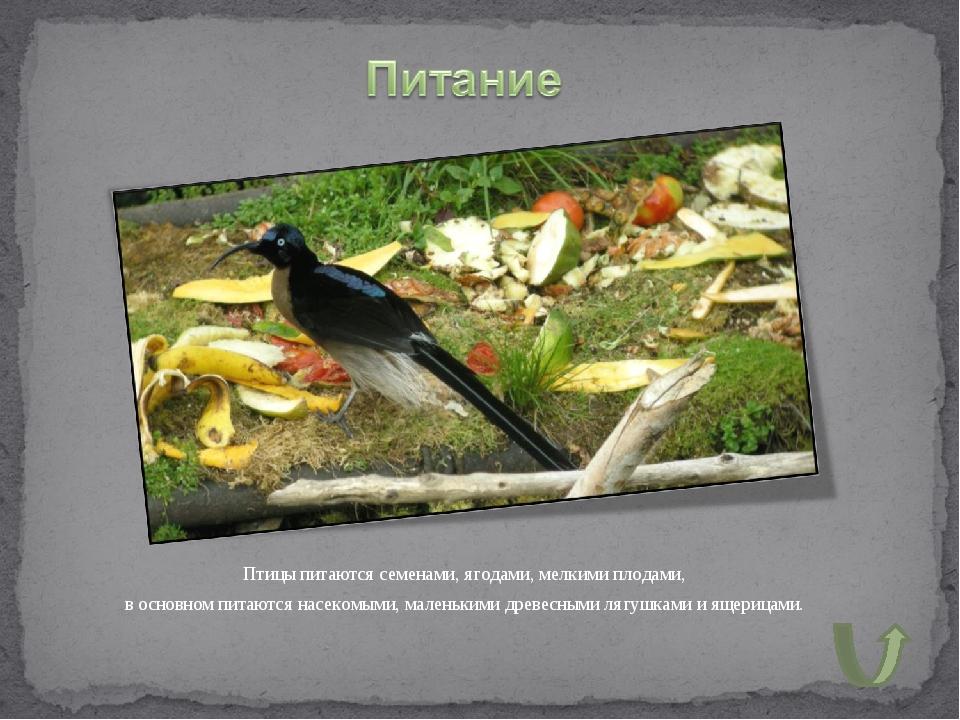 Птицы питаются семенами, ягодами, мелкими плодами, в основном питаются насеко...