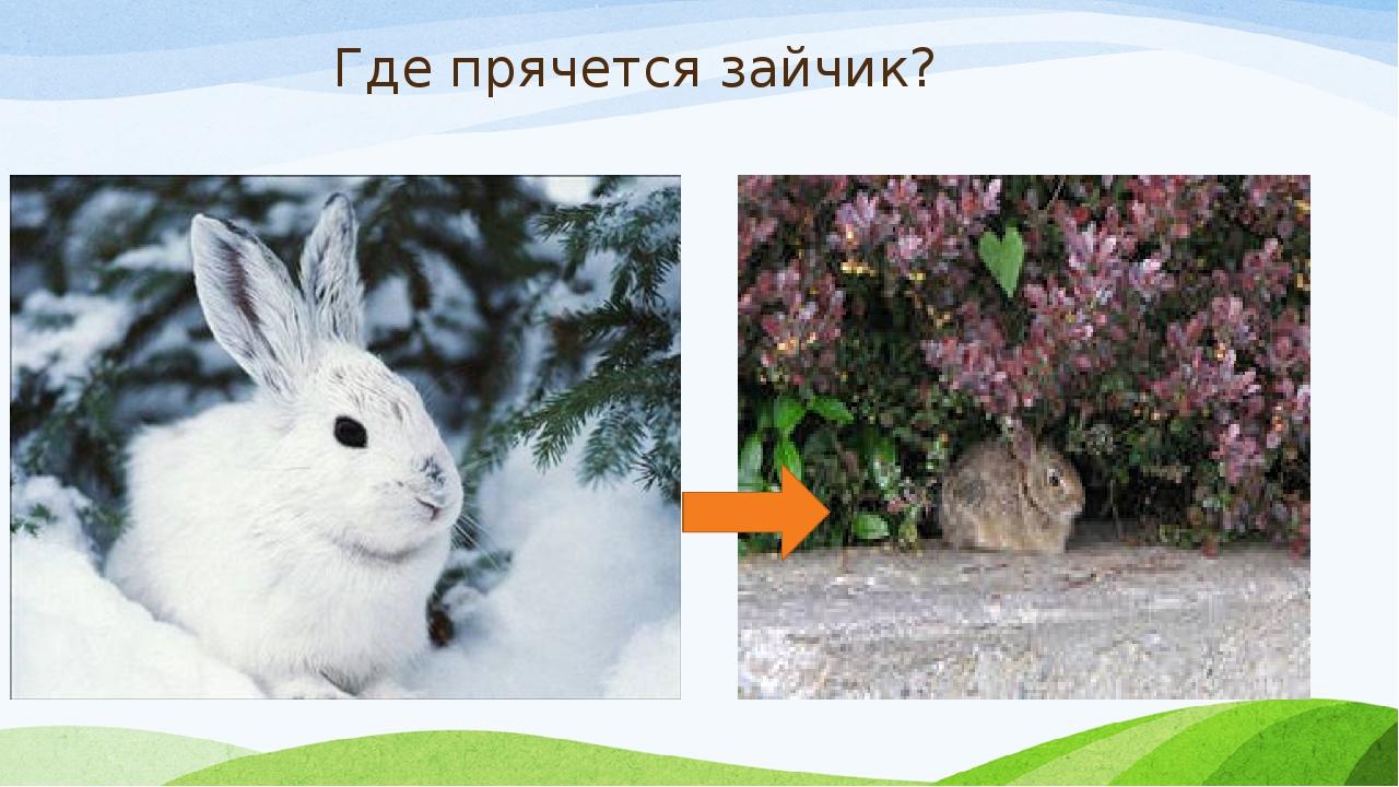 Где прячется зайчик?