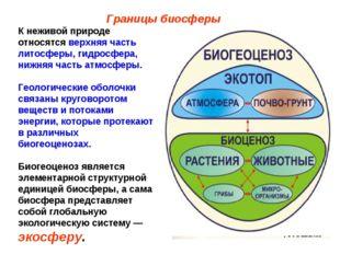 Границы биосферы К неживой природе относятся верхняя часть литосферы, гидросф