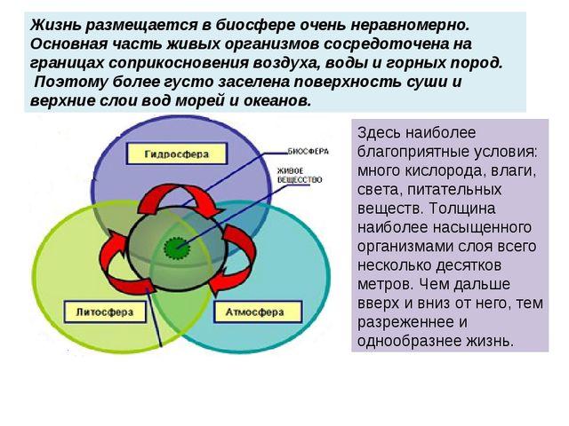 Жизнь размещается в биосфере очень неравномерно. Основная часть живых организ...