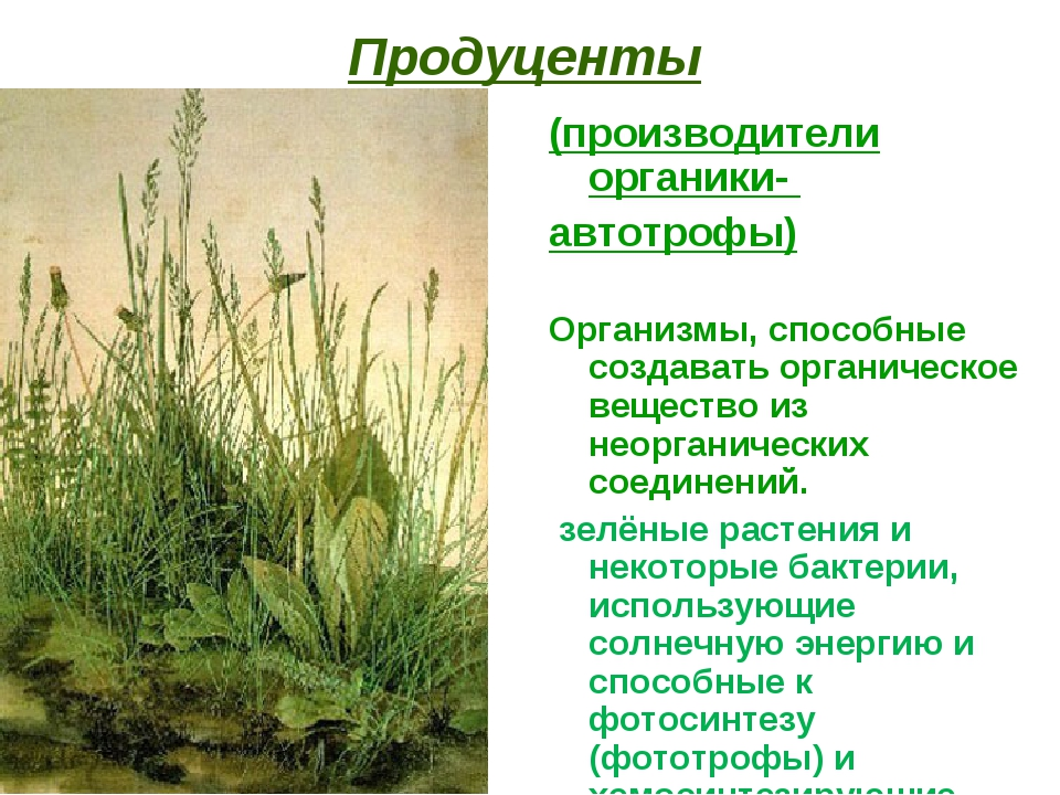Продуценты (производители органики- автотрофы) Организмы, способные создавать...