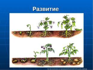 Развитие http://samsmaintenance.com/uploads/posts/2012-02/1329742475_razvitie