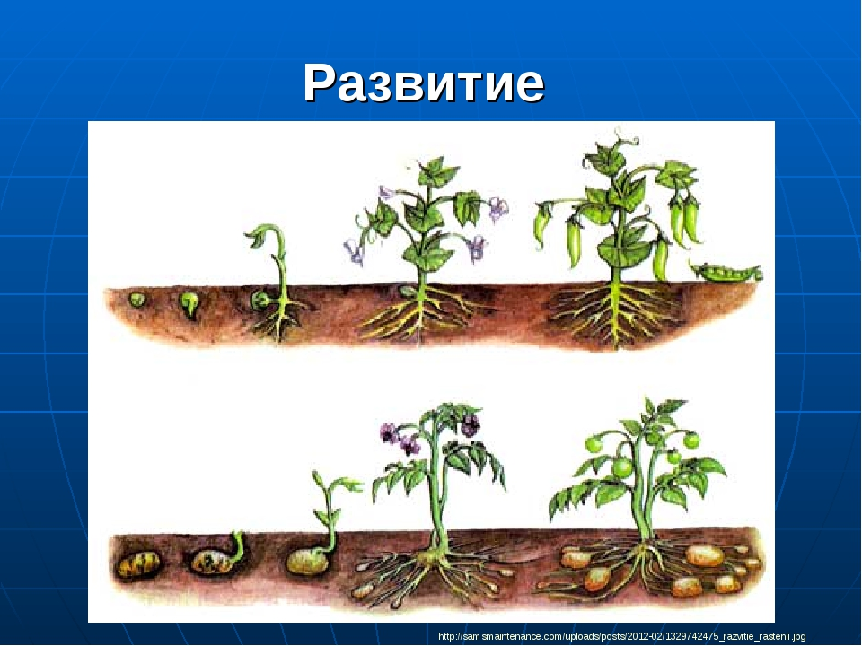 Развитие http://samsmaintenance.com/uploads/posts/2012-02/1329742475_razvitie...