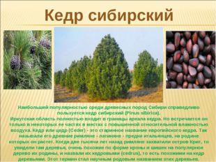 Кедр сибирский Наибольшей популярностью среди древесных пород Сибири справедл
