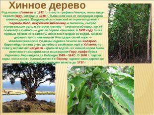 Хинное дерево Род назван (Линнеемв1742г.) в честь графини Чинчон, жены виц